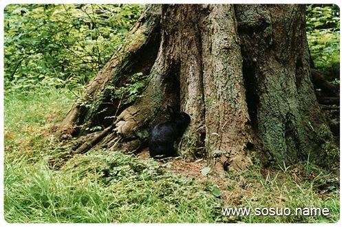 坟地种什么树
